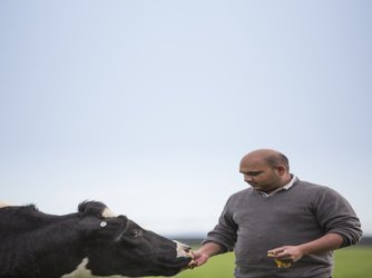 Heart and mind approach to cow care