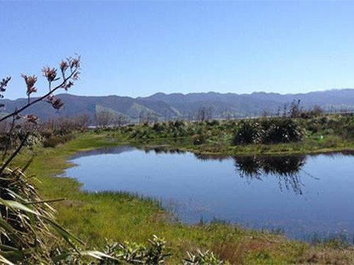 "Wetlands act as NZ's ""kidneys"""