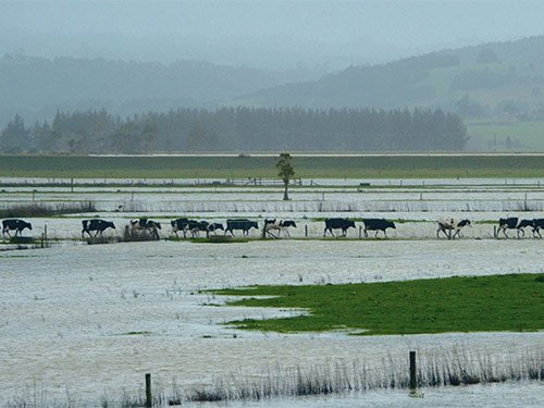 Support for flood-affected West Coast farmers