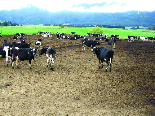 Pads and pasture growth gains
