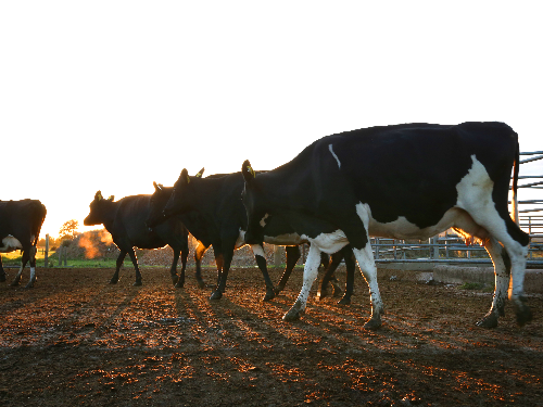Dairy farmers ready for winter