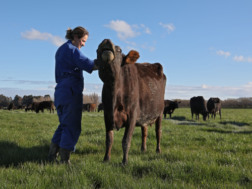 DairyNZ supports considered, careful biosecurity review