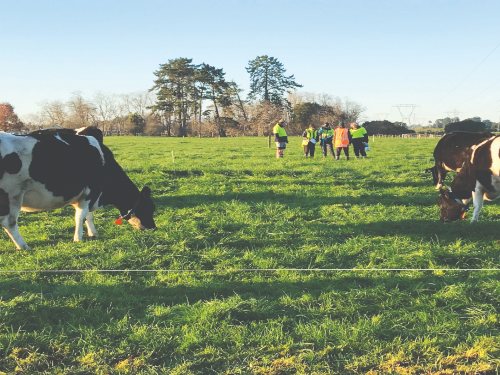 Investing your levy to boost pasture performance