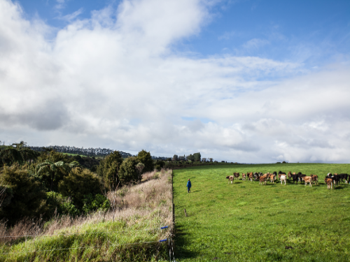 DairyNZ: economic report an inaccurate, trivial attack on farmers