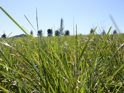 Pasture tips tackle 'what ifs'