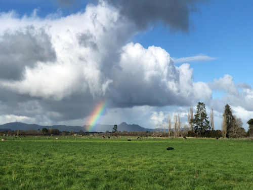 DairyNZ welcomes protection of productive land