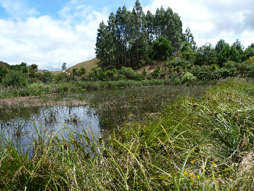 New wetland guidance to help improve water quality
